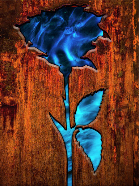Photograph - Rusted Rose by Paul Wear