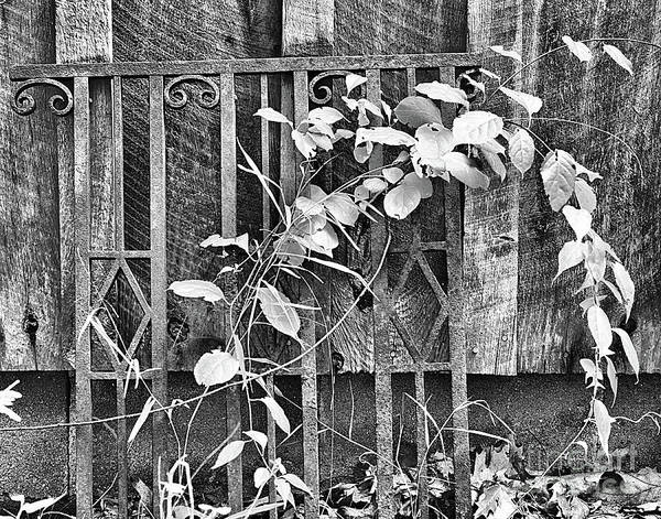 Photograph - Rusted Wrought Iron And Leaves by Smilin Eyes  Treasures