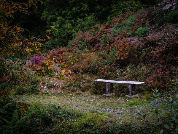 Photograph - Rustic Bench In The Autumn Irish Countryside by James Truett