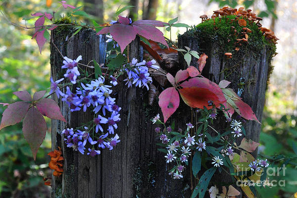 Wall Art - Painting - Rustic Bouquet by Diane E Berry