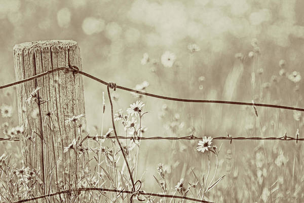Wall Art - Photograph - Rustic Fence And Wildflowers Sepia by Jennie Marie Schell