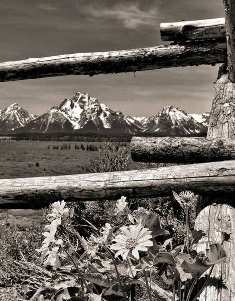 Photograph - Rustic Fence Grand Teton National Park by Dan Sproul