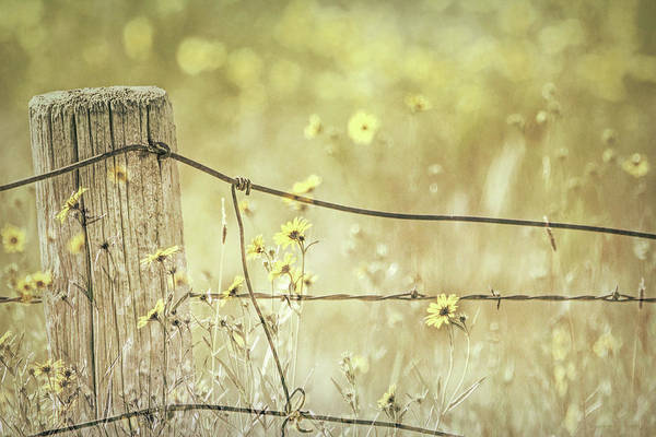 Wall Art - Photograph - Rustic Fence Post And Wildflowers Montana by Jennie Marie Schell