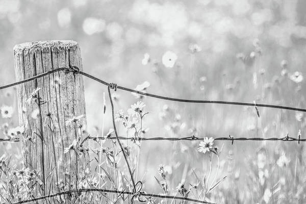Wall Art - Photograph - Rustic Fence Post And Wildflowers Monochrome by Jennie Marie Schell