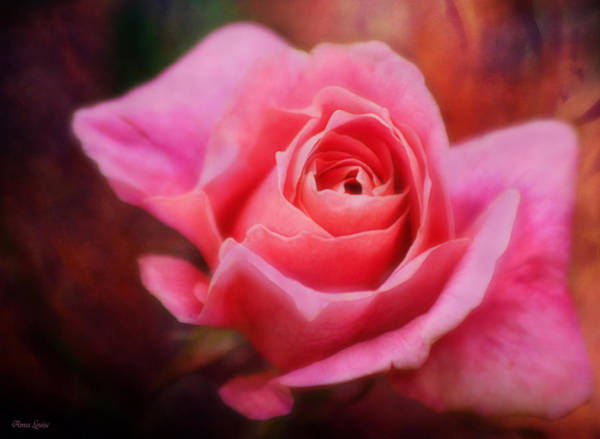 Photograph - Rustic Pink Rose by Anna Louise