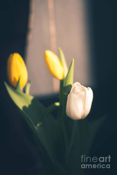 Treen Photograph - Rustic Tulips by Cheryl Baxter