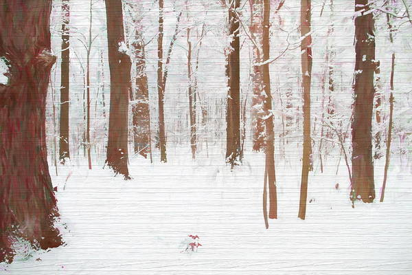 Painting - Rustic Winter Forest by Dan Sproul