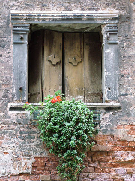 Photograph - Rustic Wooden Window Shutters by Donna Corless