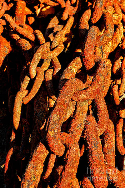 Chain Link Photograph - Rusting Chains In Warm Sunlight by Olivier Le Queinec
