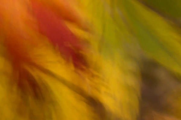 Photograph - Rustling Leaves by Margaret Denny