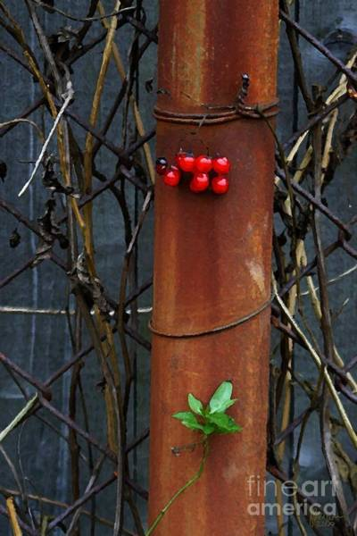 Photograph - Rusty Fence by Jeff Breiman