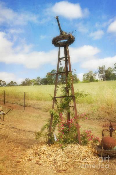 Photograph - Rusty Garden Feature by Elaine Teague