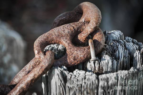 Chain Link Photograph - Rusty Iron Chain Railing Fragment by Elena Elisseeva