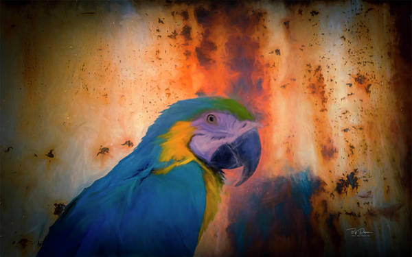 Photograph - Rusty Parrot  by Bill Posner