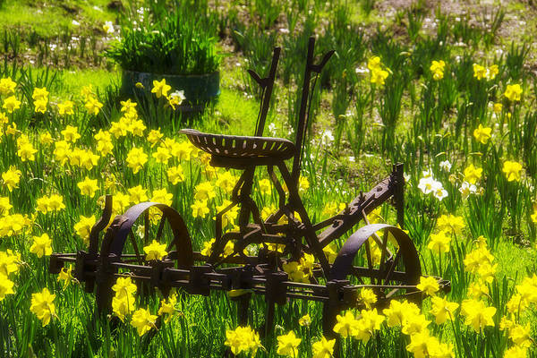 Farm Equipment Photograph - Rusty Plow In Daffodils  by Garry Gay