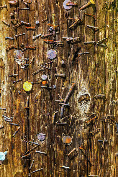 Staples Photograph - Rusty Staples In Old Pole by Garry Gay