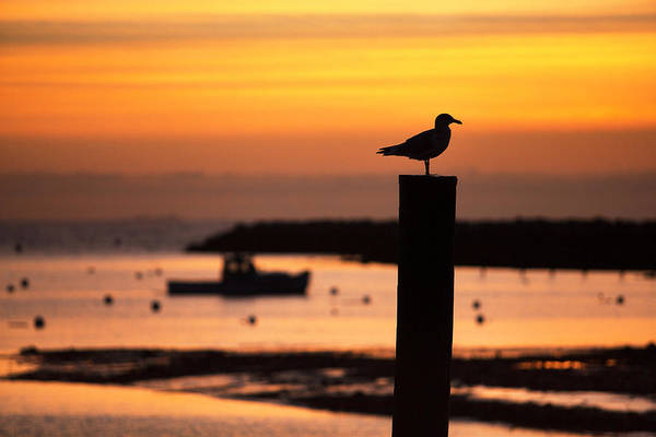 Scenic Photograph - Rye Harbor Sunrise by Eric Gendron