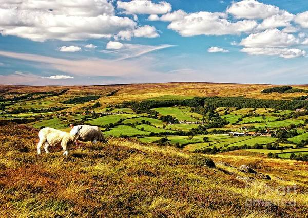 Photograph - Ryedale Countryside Yorkshire by Martyn Arnold