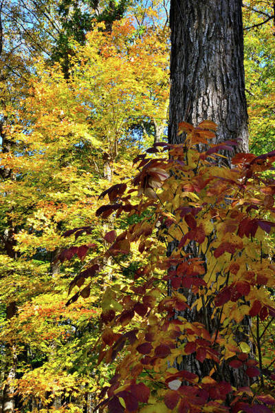 Photograph - Ryserson Woods Fall Colors by Ray Mathis