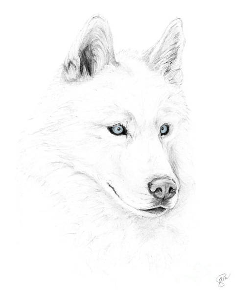 Grayscale Digital Art - Saber A Siberian Husky by Stacey May