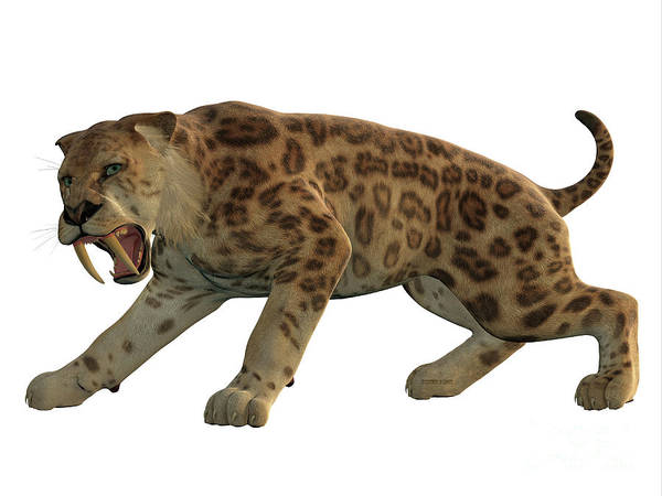 Smilodon Wall Art - Painting - Saber-tooth Cat Angry by Corey Ford