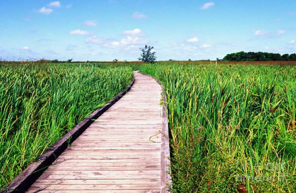 Alligator Alley Photograph - Sabine National Wildlife Refuge Wetland Walkway by Thomas R Fletcher