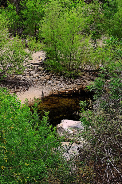 Photograph - Sabino Canyon V43 by Mark Myhaver