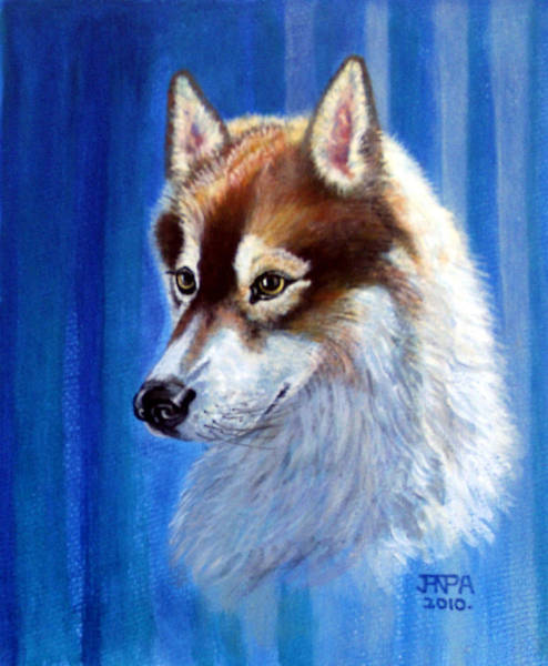 Siberian Husky Mixed Media - Sabre by James Richardson