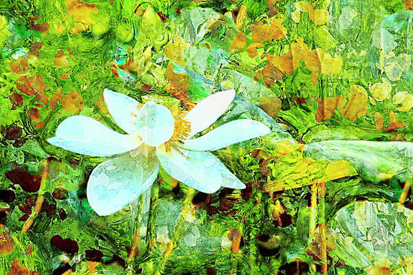 Wall Art - Photograph -  Sacred Lotus Painted Art Series by Geraldine Scull