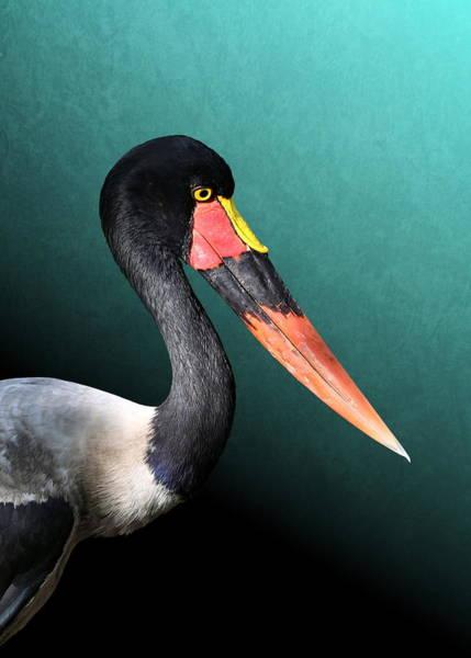 Photograph - Saddle-billed Stork by Debi Dalio