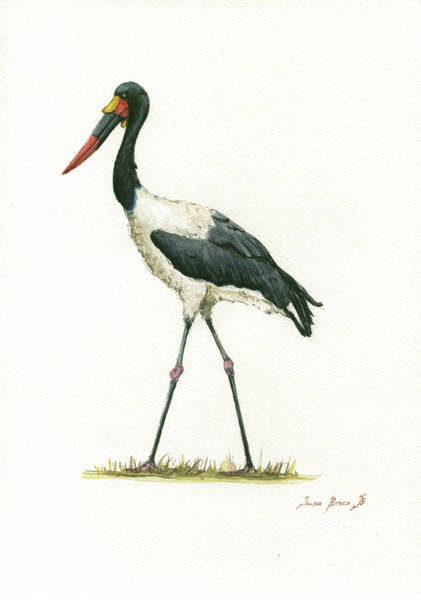 Saddle Wall Art - Painting - Saddle Billed Stork by Juan Bosco