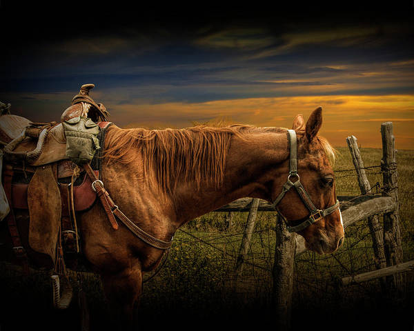 Photograph - Saddle Horse On The Prairie by Randall Nyhof