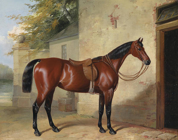 Wall Art - Painting - Saddled Brown Horse by William Barrand