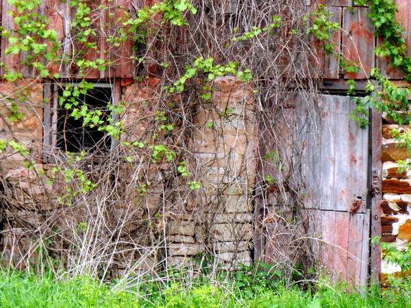 Photograph - Sadly Neglected by Wild Thing