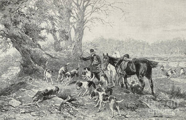 Wall Art - Drawing - Safe  Dogs And Hunters Surrounding Lair by Carl Suhrlandt