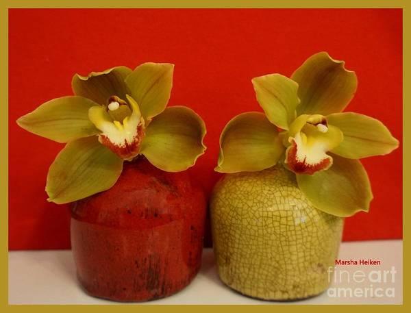Wall Art - Photograph - Sage Green Orchid by Marsha Heiken