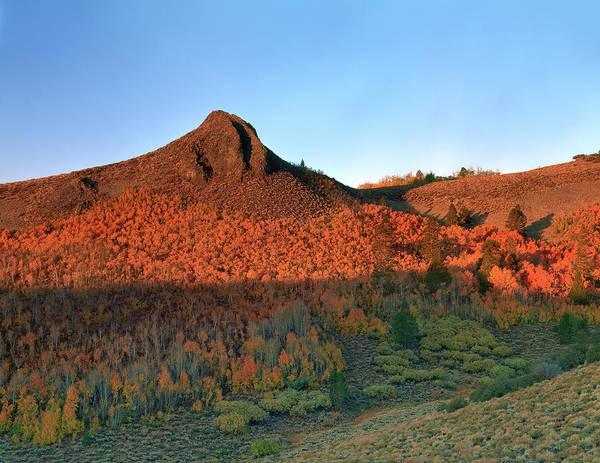 Photograph - Sage Hen Summit Meadow by Paul Breitkreuz