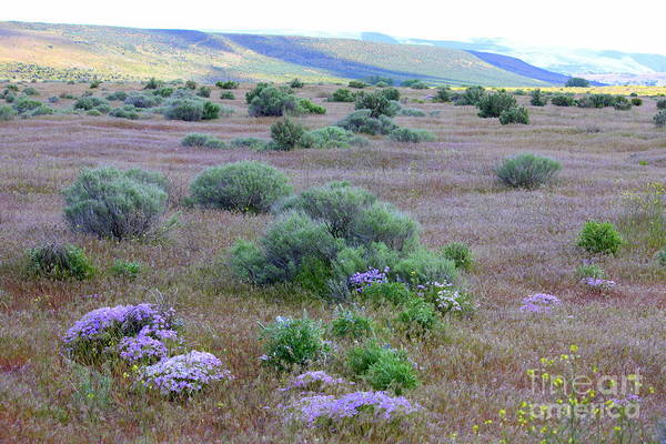 Photograph - Sagebrush And Wildflowers by Carol Groenen