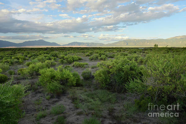 Photograph - Sagebrush Country by Charles Owens