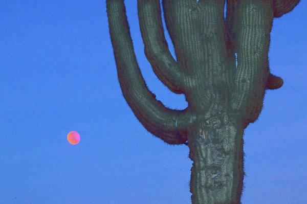 Liechtenstein Digital Art - Saguaro And Eclipse IIi by Carolina Liechtenstein