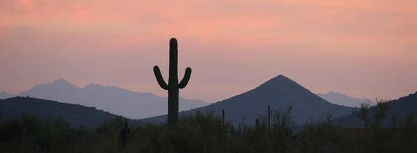 Photograph - Saguaro At Sunset  by Christy Pooschke