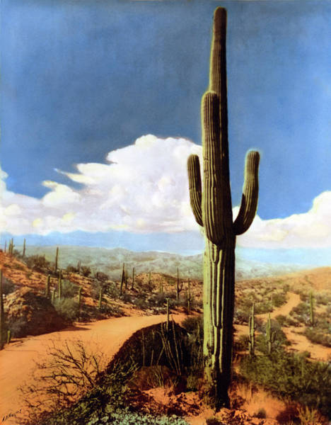 Photograph - Saguaro Cactus 2 by Marilyn Hunt