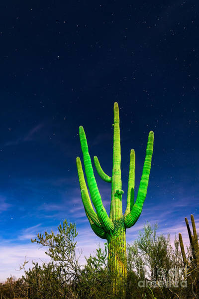 Photograph - Saguaro Cactus Against Star Filled Sky by Bryan Mullennix