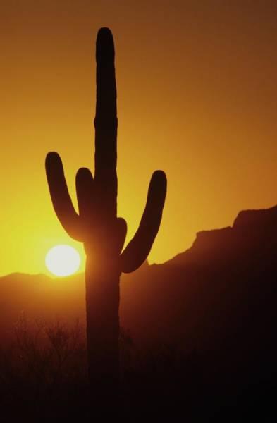Saguaro Cactus And Sunset Art Print