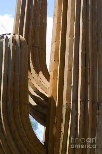 Wall Art - Photograph - Saguaro Cactus In Steel by Tim Hightower