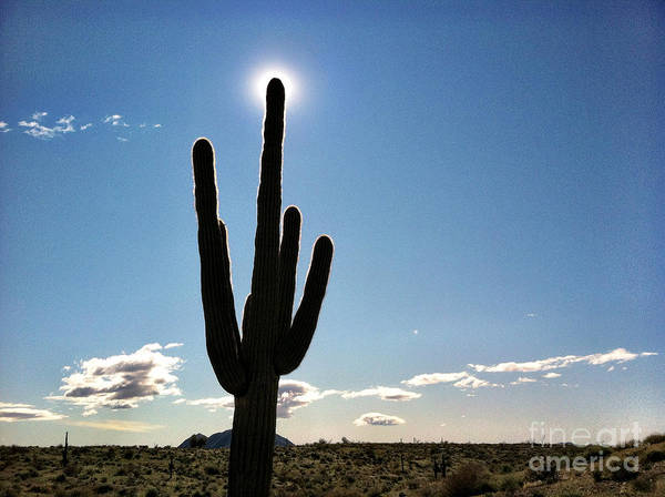 Photograph - Saguaro Cactus Silhouette With Sunburst  by Bryan Mullennix