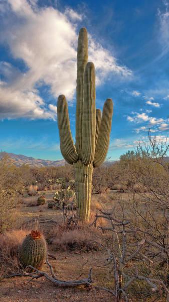 Photograph - Saguaro Cactus by Susan Rissi Tregoning