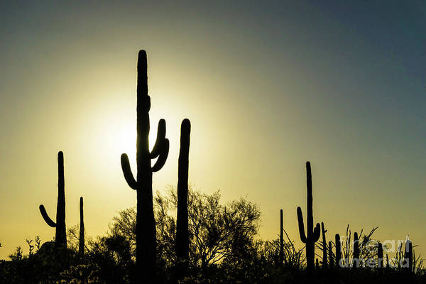 Tucson Photograph - Saguaro by DiFigiano Photography