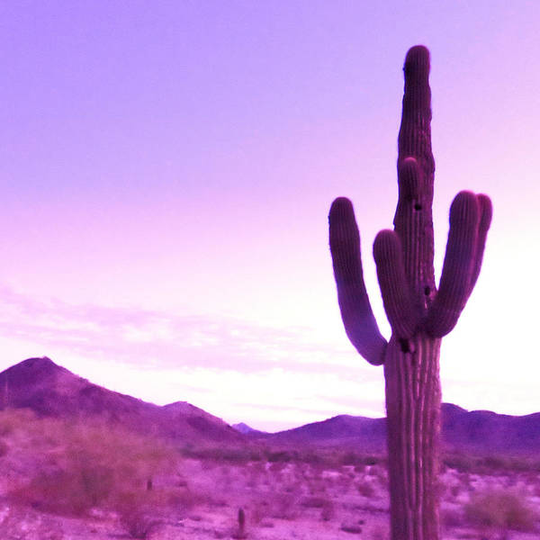 Photograph - Saguaro Of The Purple Haze by Judy Kennedy