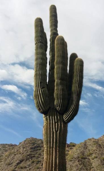Photograph - Saguaro by Sarah Marie